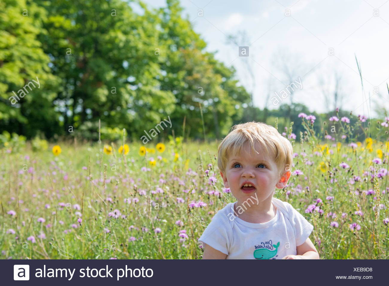 Boy sitting in a meadow, Michigan, America, USA - Stock Image