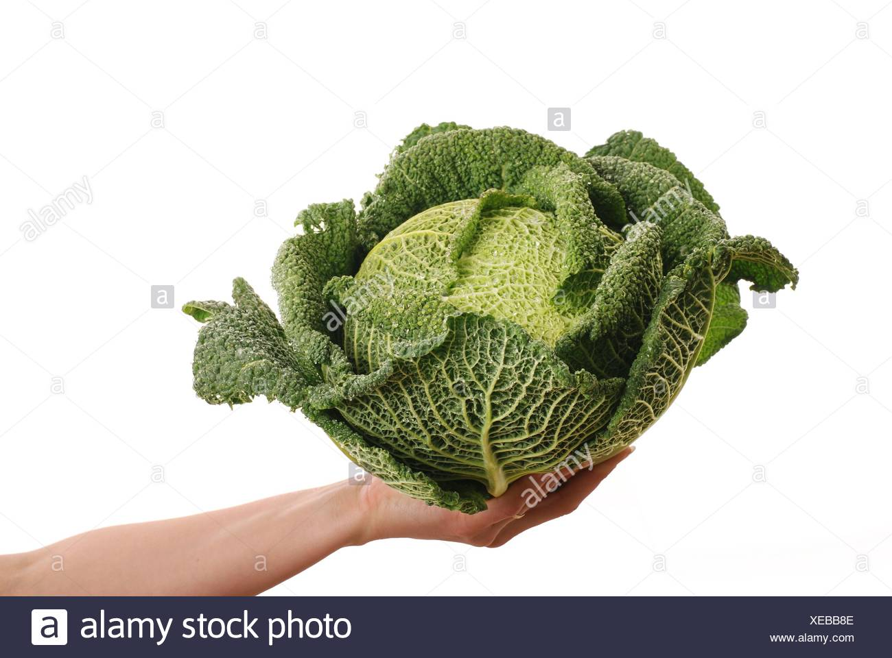 leaf isolated cabbage offer savoy vegetables lawn green food aliment leaf health detail isolated lifestyle closeup leaves - Stock Image