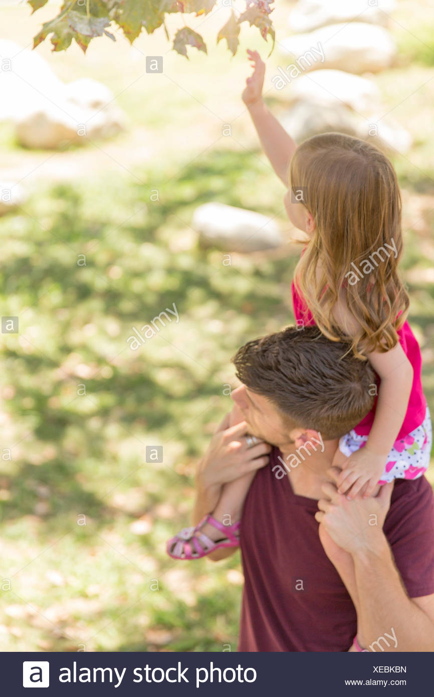Young girl reaching for tree leaf from fathers shoulders in park - Stock Image