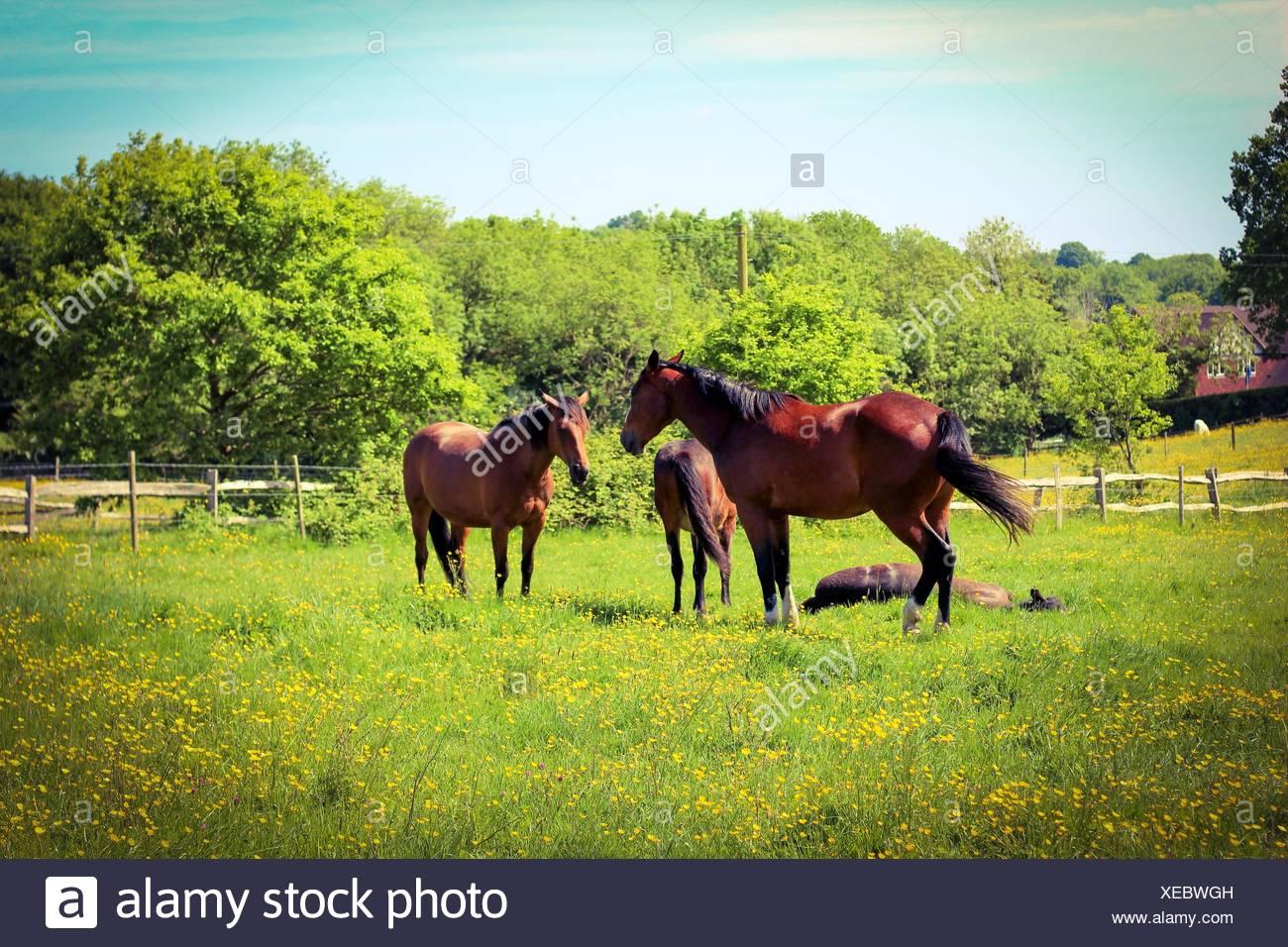 hayfield - Stock Image