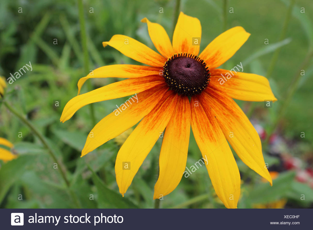 Pictures of daisy flower stock photos pictures of daisy flower yellow daisy flower stock image izmirmasajfo