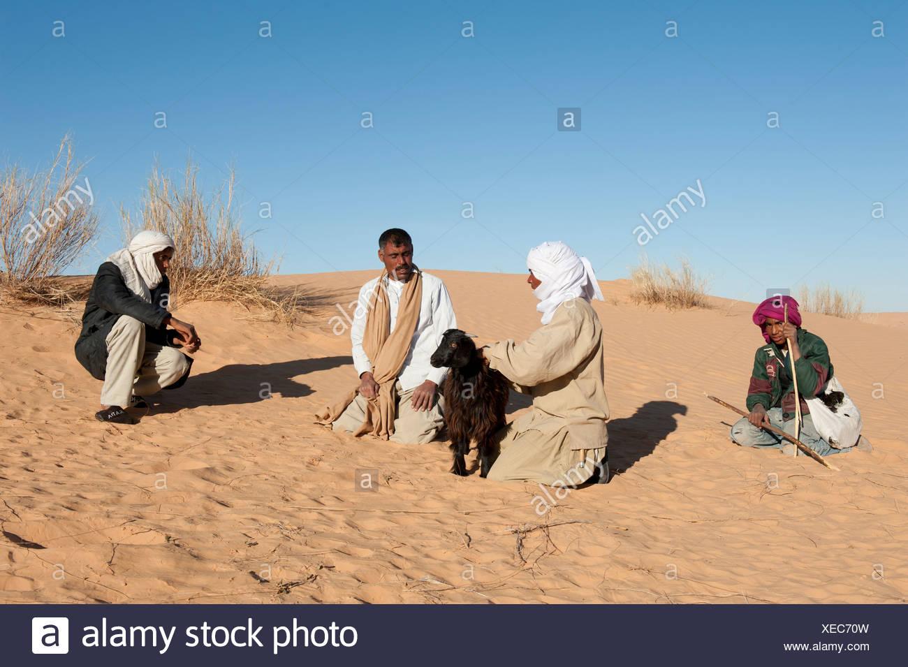 Negotiation, Bedouins buying a goat, sand dunes, Sahara desert between Douz and Ksar Ghilane, Southern Tunisia, Tunisia, Maghreb - Stock Image