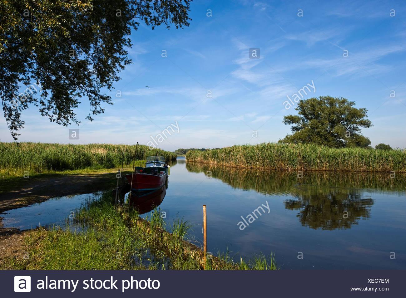 Nature Reserve, Rhine River Delta, Fussach, Bregenz, Vorarlberg, Austria, Europe Stock Photo
