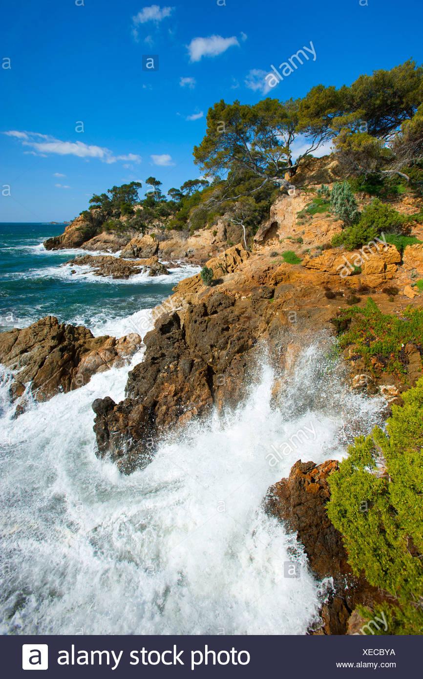 Point de Layet, France, Europe, Côte d'Azur, Provence, Var, sea, Mediterranean Sea, coast, rock, cliff, trees, pines, waves, sur - Stock Image