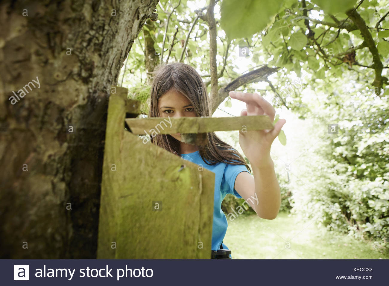 A young girl, a birdwatcher, checking a nesting box on a tree trunk. - Stock Image