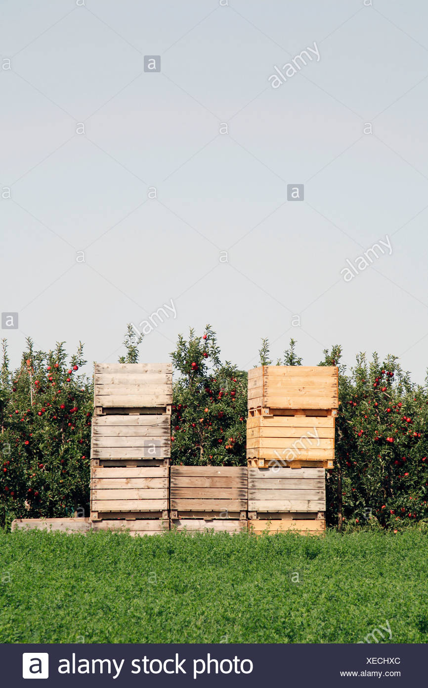Spain, Catalonia, Apple plantation with wooden boxes Stock Photo