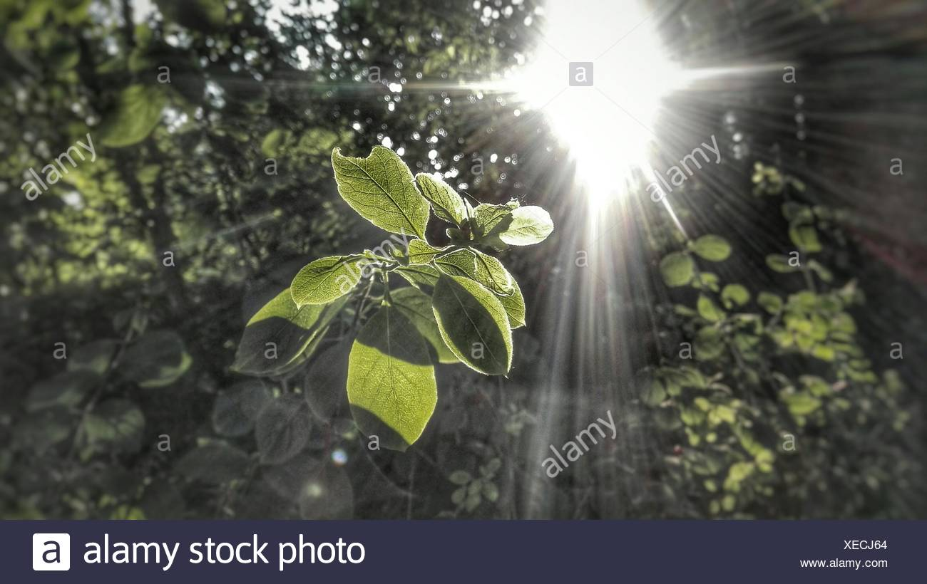 Sun Shinning On Plants Growing Outdoors - Stock Image
