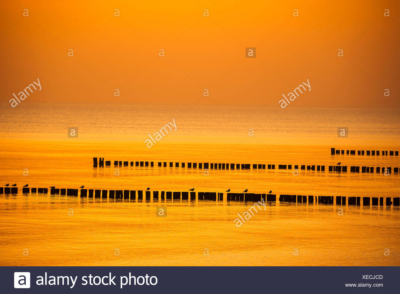 Breakwaters with gulls in the orange light of the setting sun. - Stock Image
