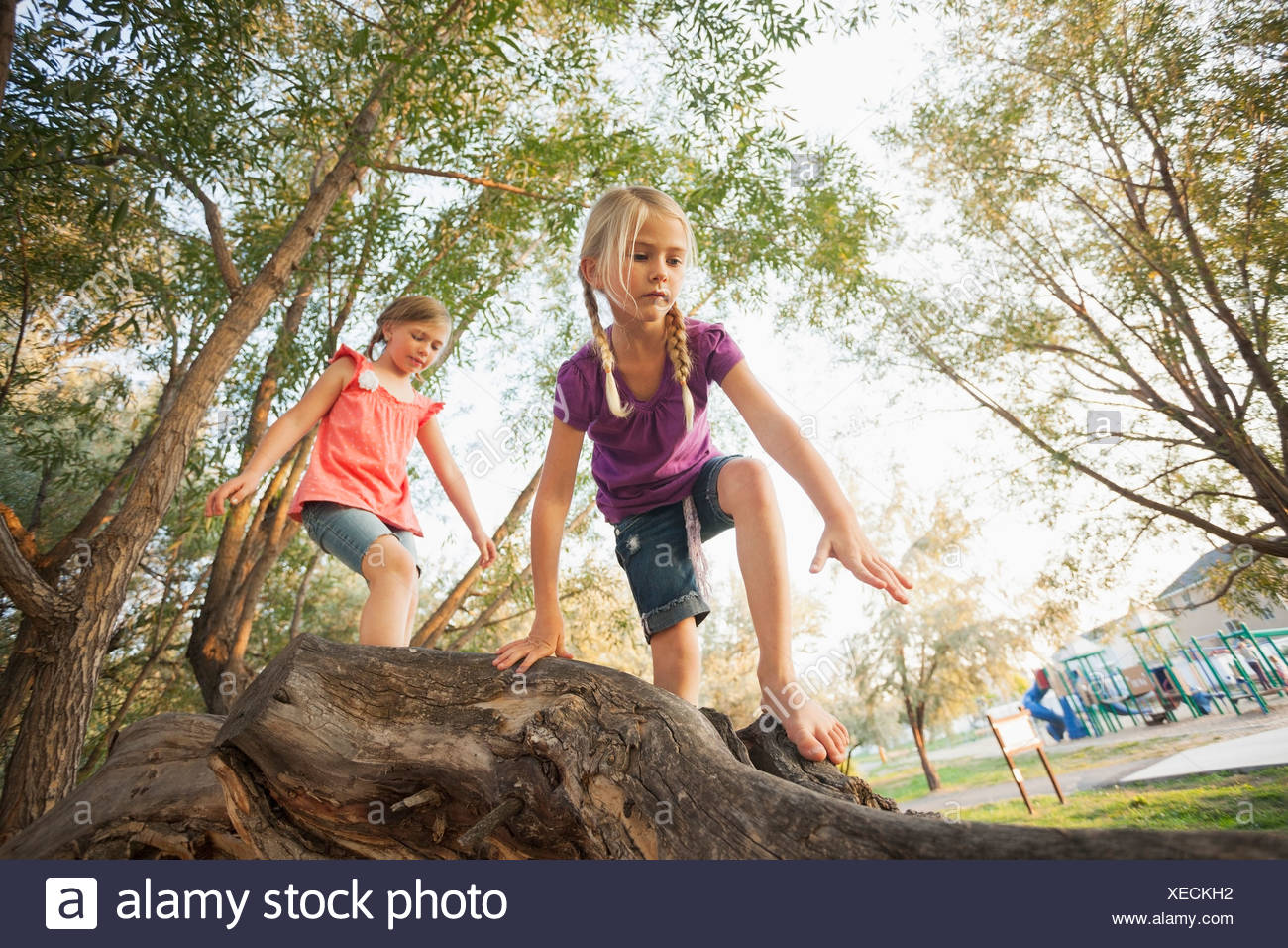 USA, Utah, Lehi, Two little girls (4-5, 6-7) climbing on very large tree branch - Stock Image