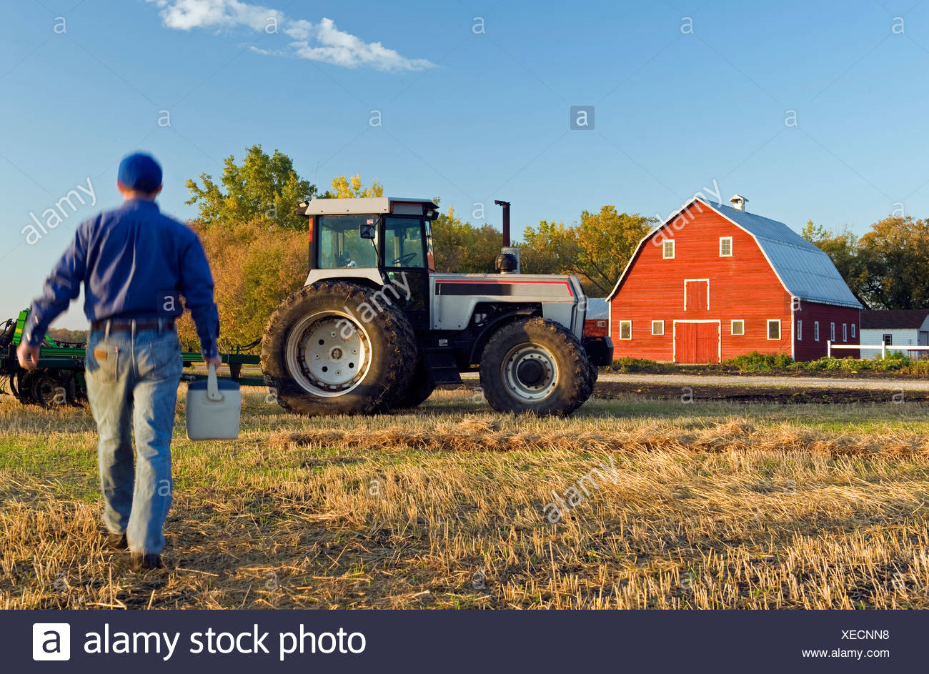 Farmer with a lunch box walking in a field of grain stubble towards his tractor, Grande Pointe, Manitoba, Canada - Stock Image