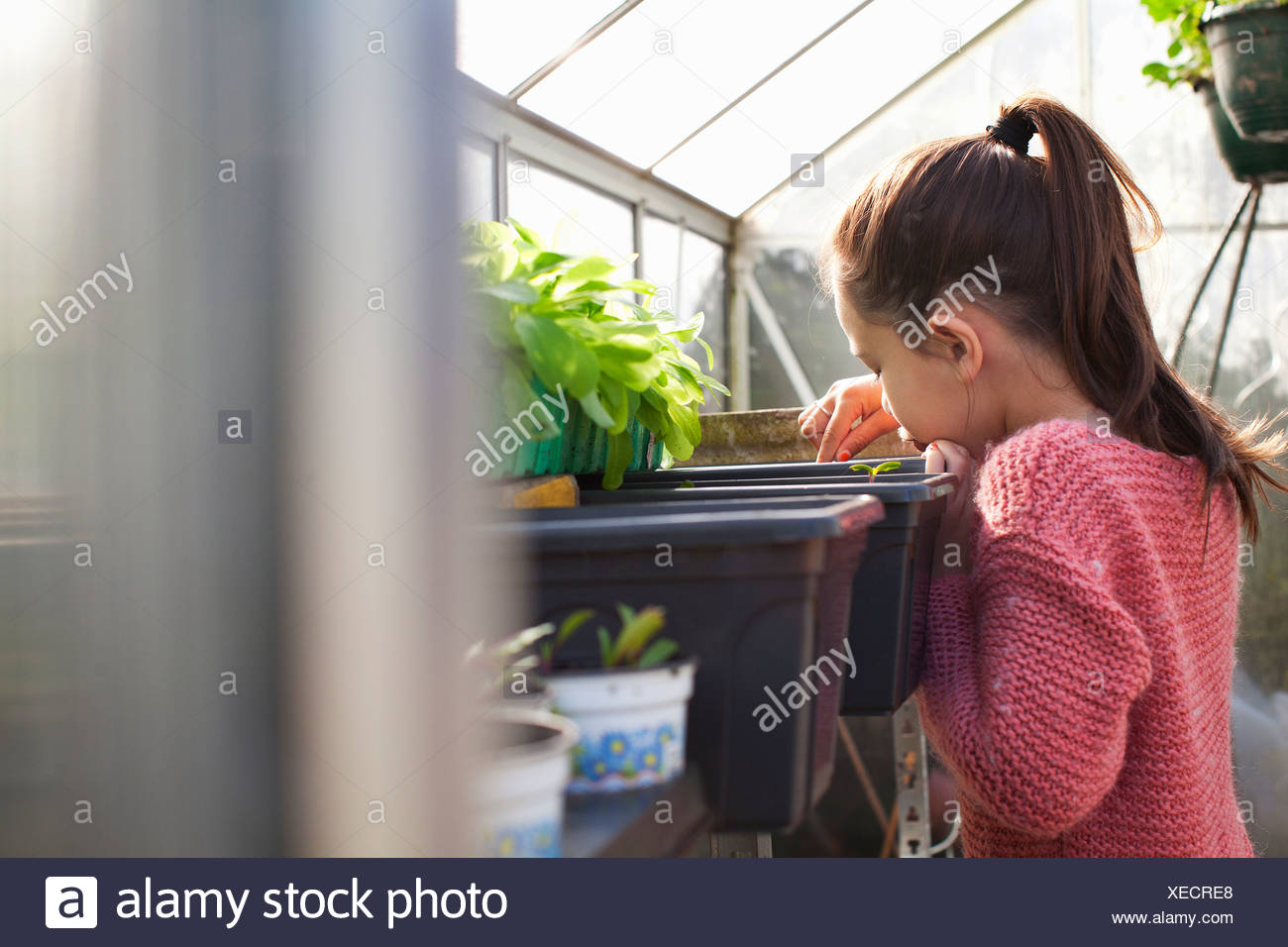 Girl looking at plants - Stock Image