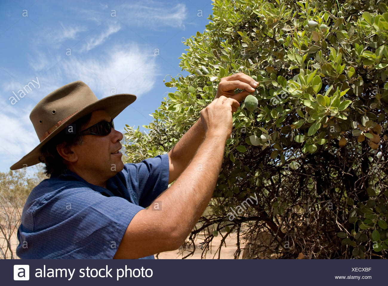 Bush walk with half aboriginal Bob Tailer, Simpsons Gap, West Mac Donell National Park, Alice Springs, Northern Territory, Aust - Stock Image