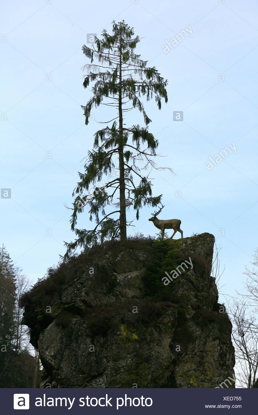 Deer on a rock in the Wehra valley Stock Photo