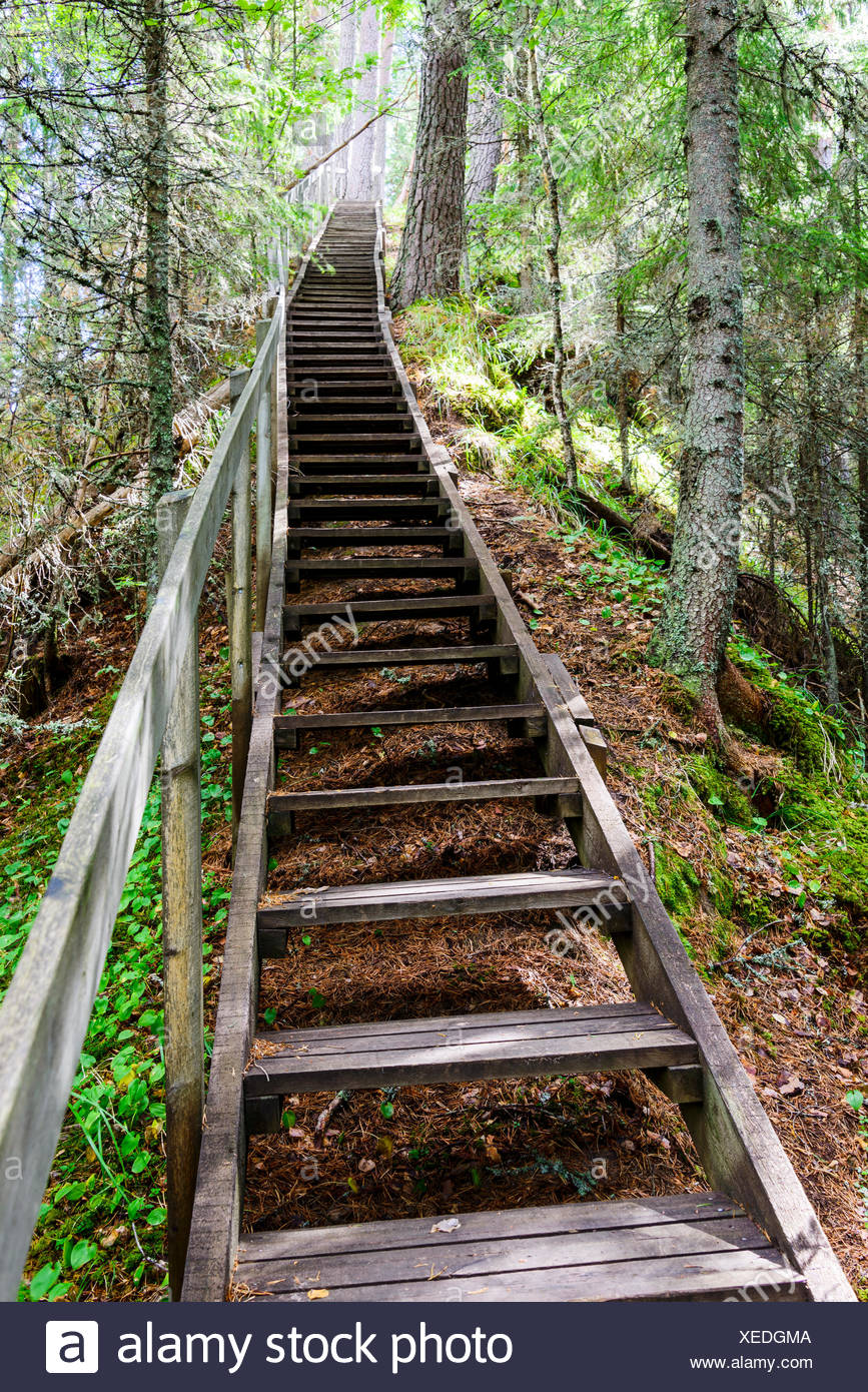 Wooden steps in forest - Stock Image