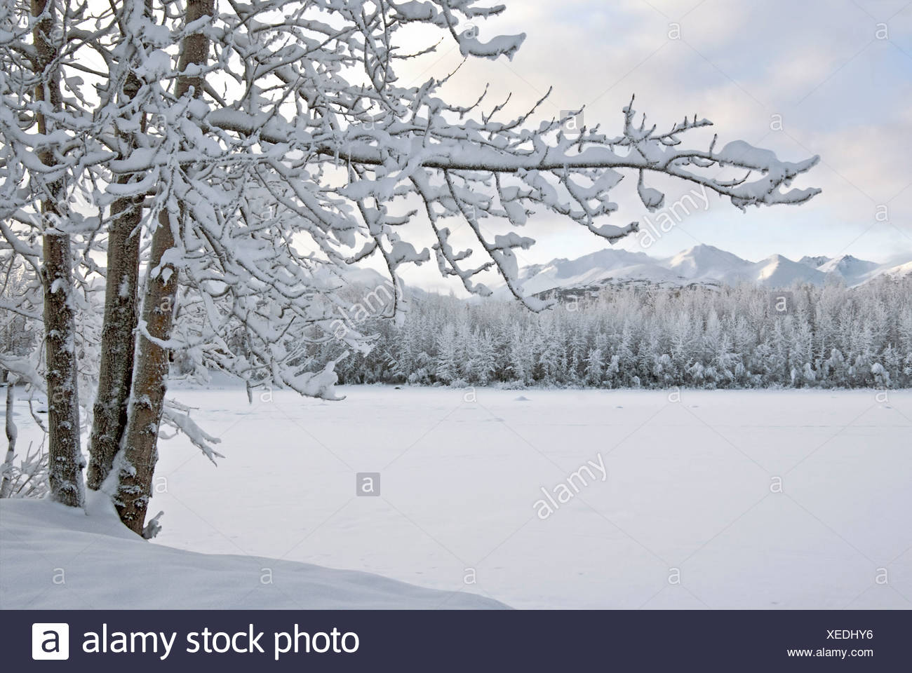 View of snow covered Cheney Lake on a winter afternoon in East Anchorage with Chugach Mountains in the background, Alaska - Stock Image