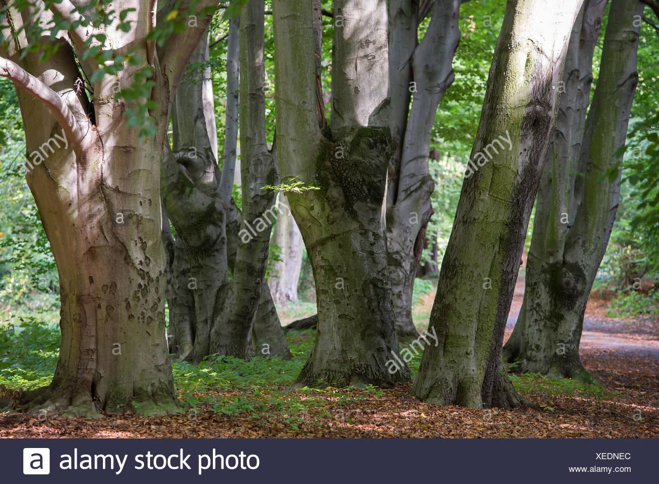 Berlin, Germany, in the trees Volkspark Rehberge - Stock Image