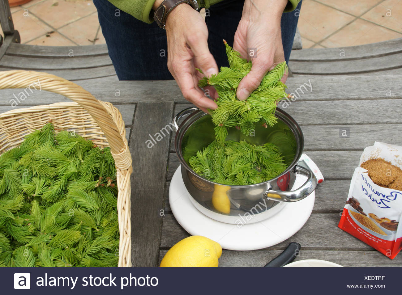 Weighing spruce-shoots - Stock Image