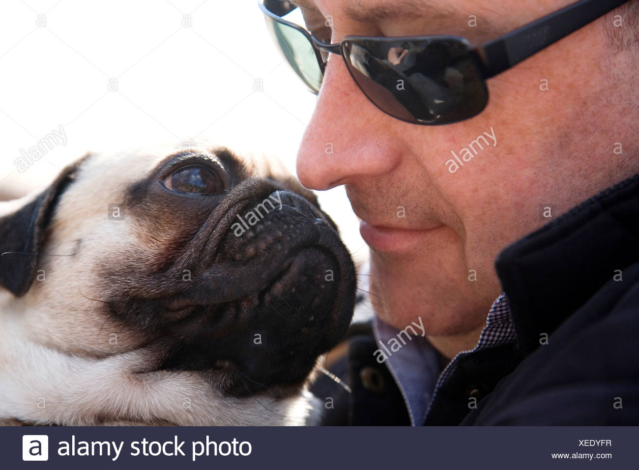 Portrait of a man and a pug looking at each other, nose and snout nearly touching - Stock Image