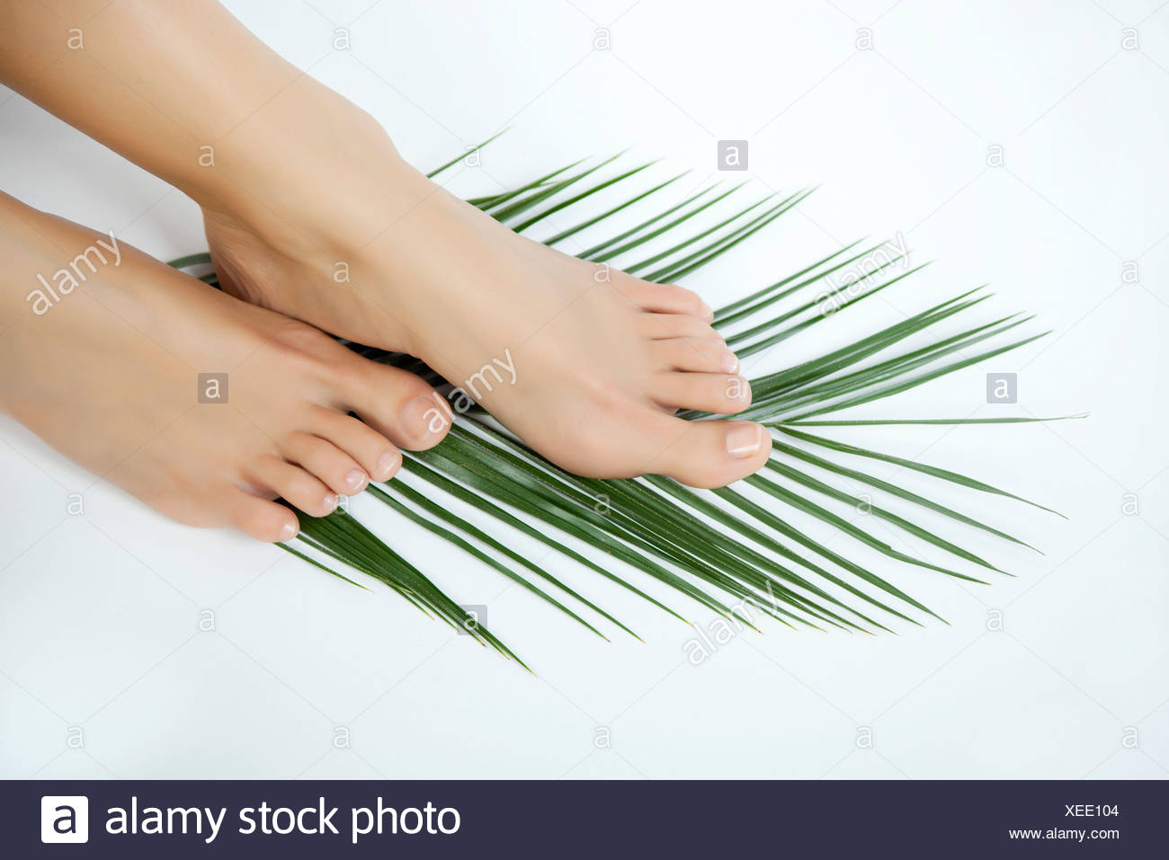 Woman's bare feet on palm frond - Stock Image