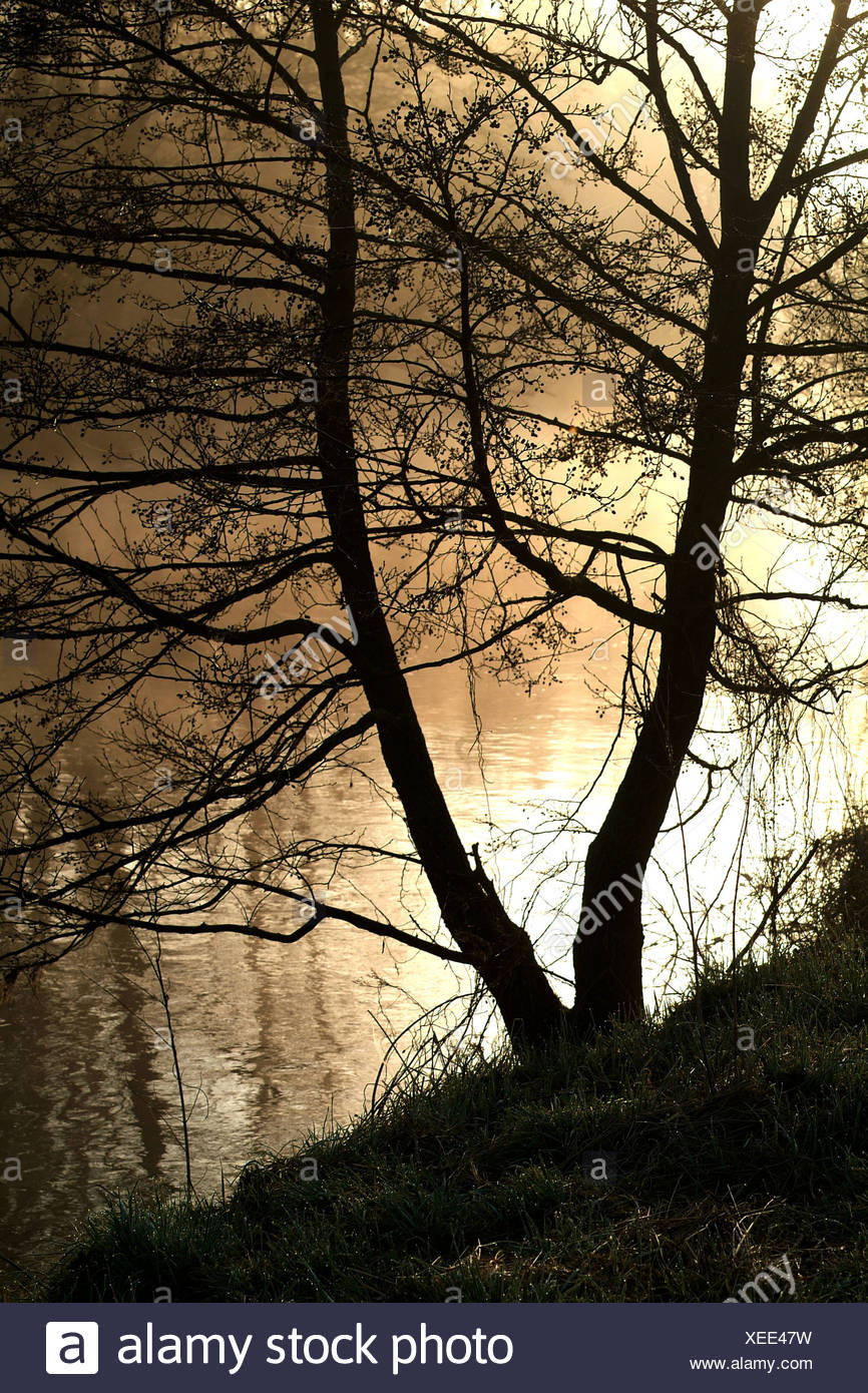 Tree at the river bank surrounded by fog in the golden morning light Stock Photo
