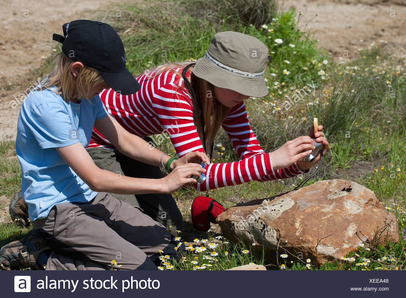 wall bee, mason bee (Megachile parietina, Chalicodoma parietina, Chalicodoma muraria), two children taking photos from wall bees on a stone, Germany - Stock Image