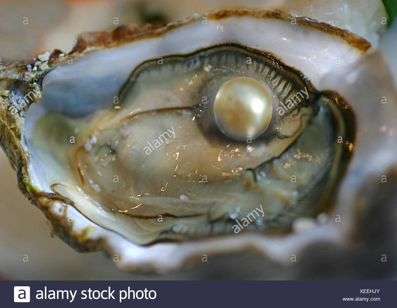 Pacific oyster, giant Pacific oyster, Japanese oyster (Crassostrea gigas, Crassostrea pacifica), open with pearl - Stock Image