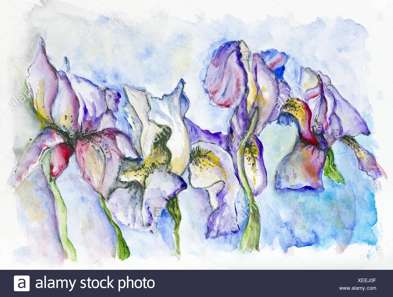 Gentle irises flowers - Stock Image