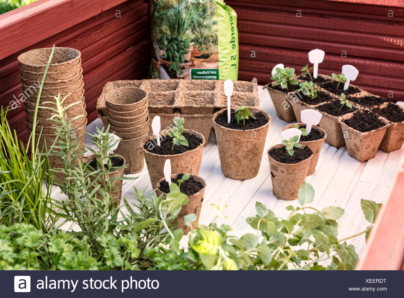 table for plants, herbs, seedlings, - Stock Image