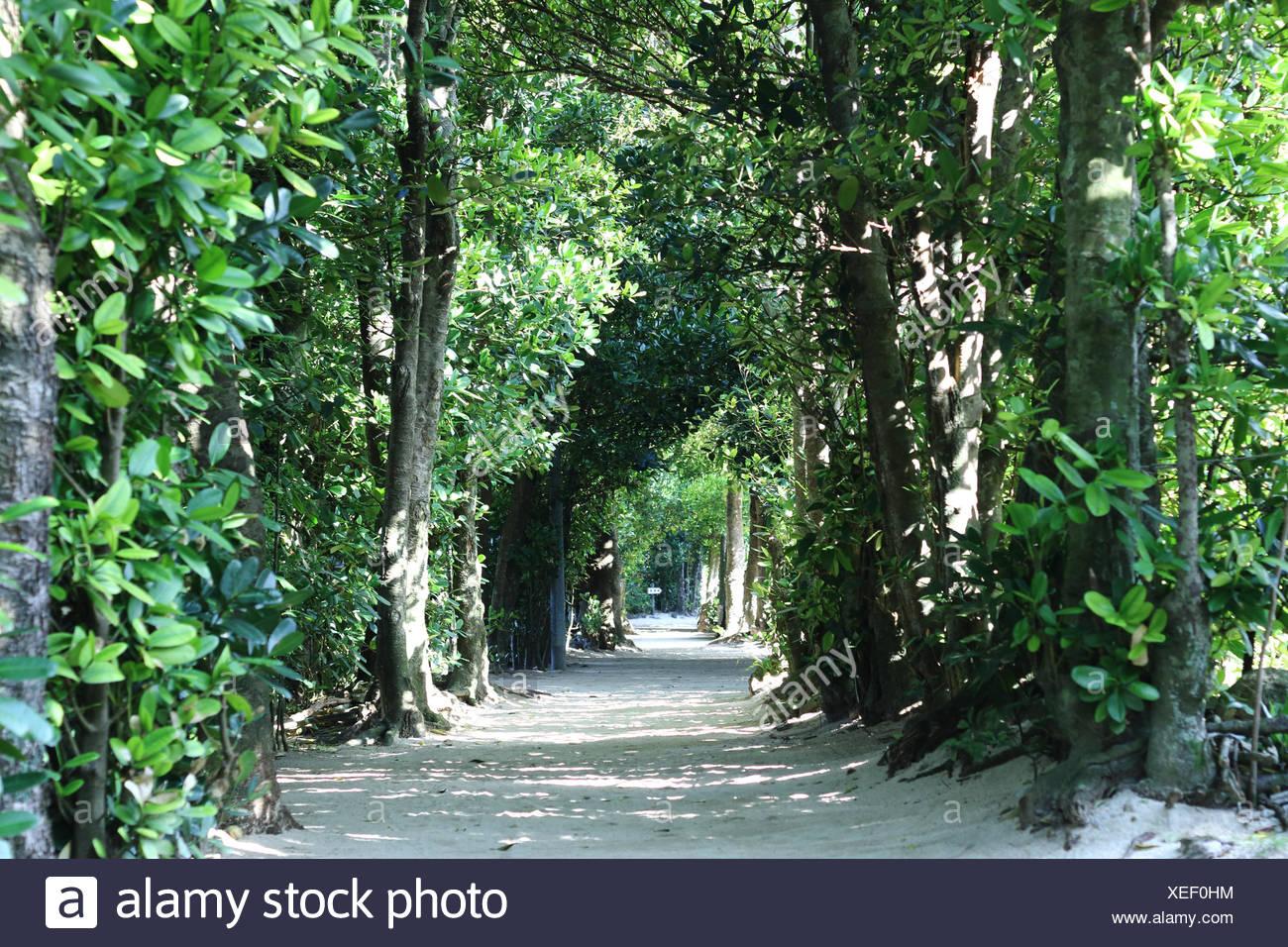 Japan, Tree lined path - Stock Image