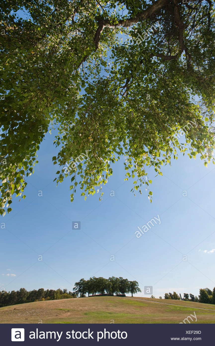 Idyllic scene of park - Stock Image