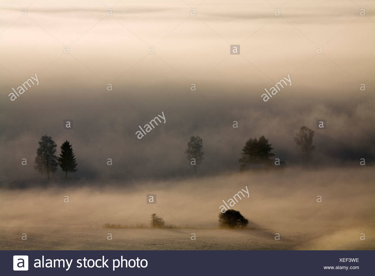 Germany, Bavaria, Murnau, Misty landscape Stock Photo