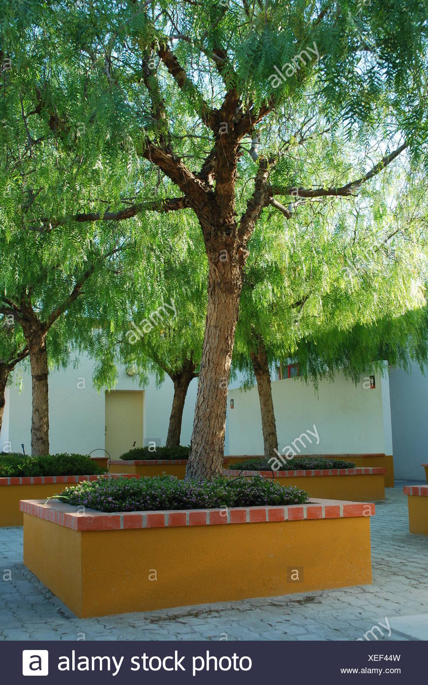 Tree Flora Orange Lawn Green Beauty Nature Natural Beautiful Beauteously Nice Stock Photo 284303625 Alamy