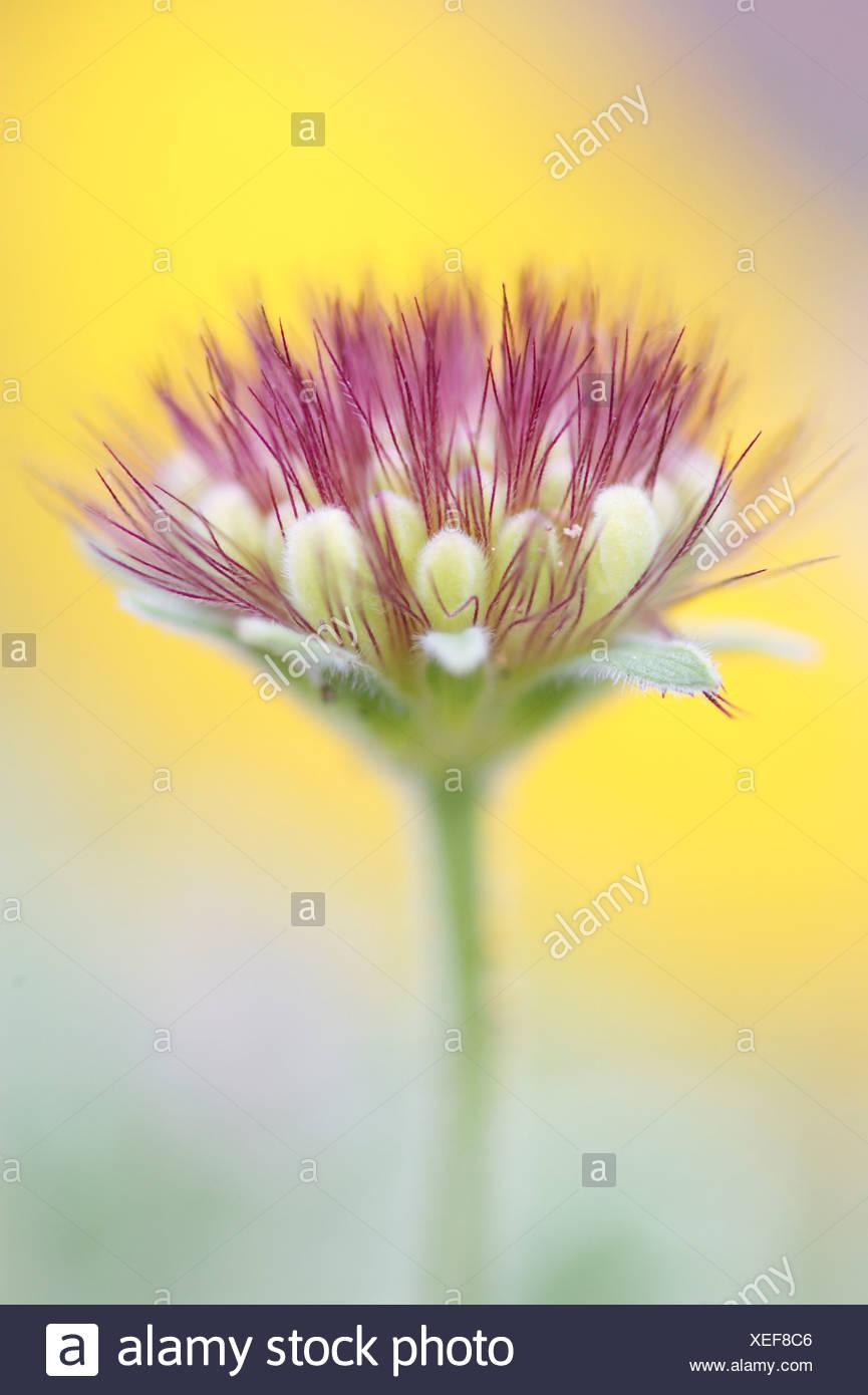 Flower, Purple. - Stock Image