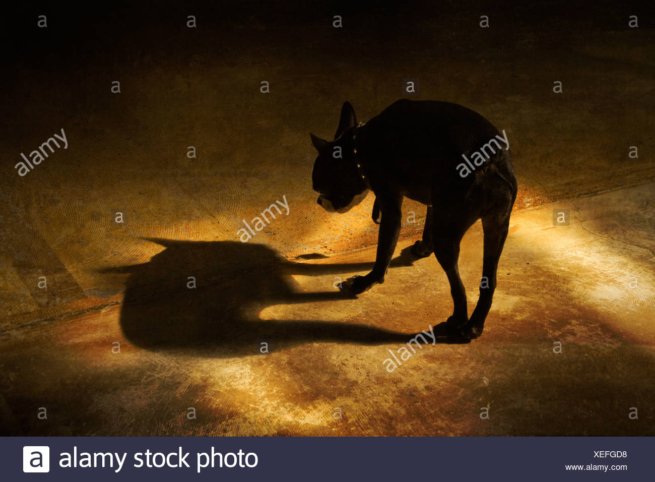 A dog and its shadow - Stock Image