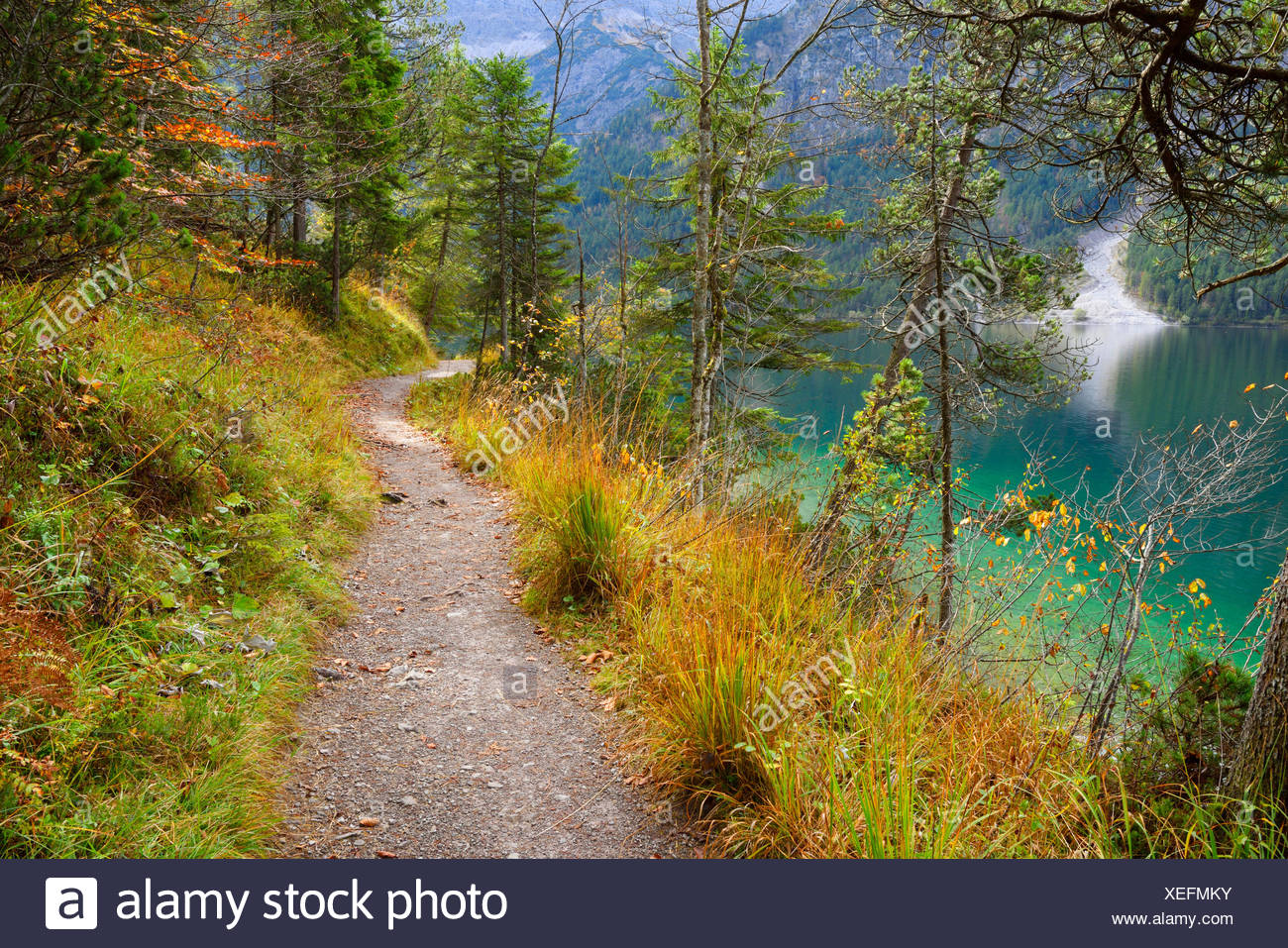 little trail besides lake Plansee in autumn, Austria, Tyrol - Stock Image