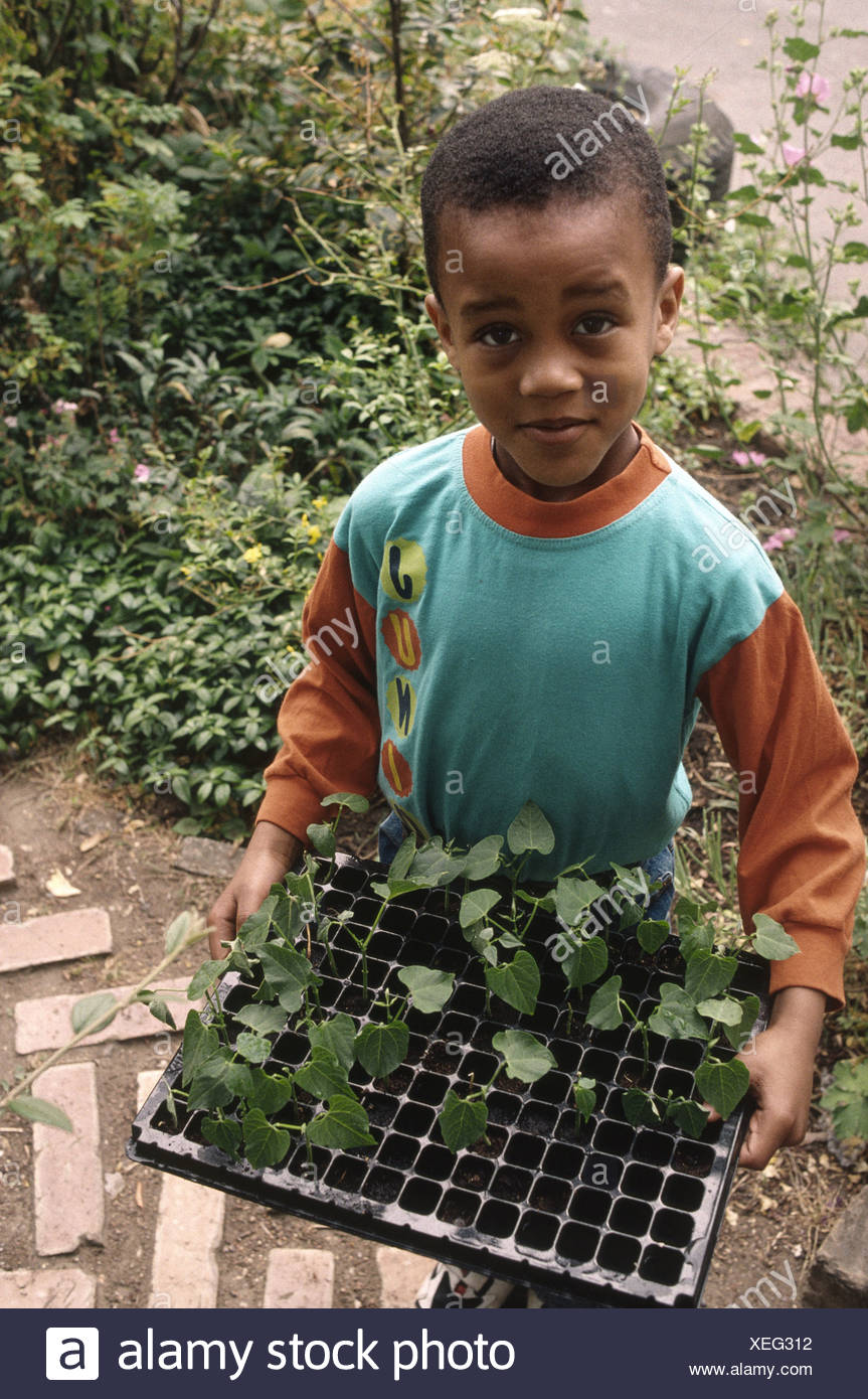 Young primary school boy holding a tray of seedlings to plant in the school grounds - Stock Image