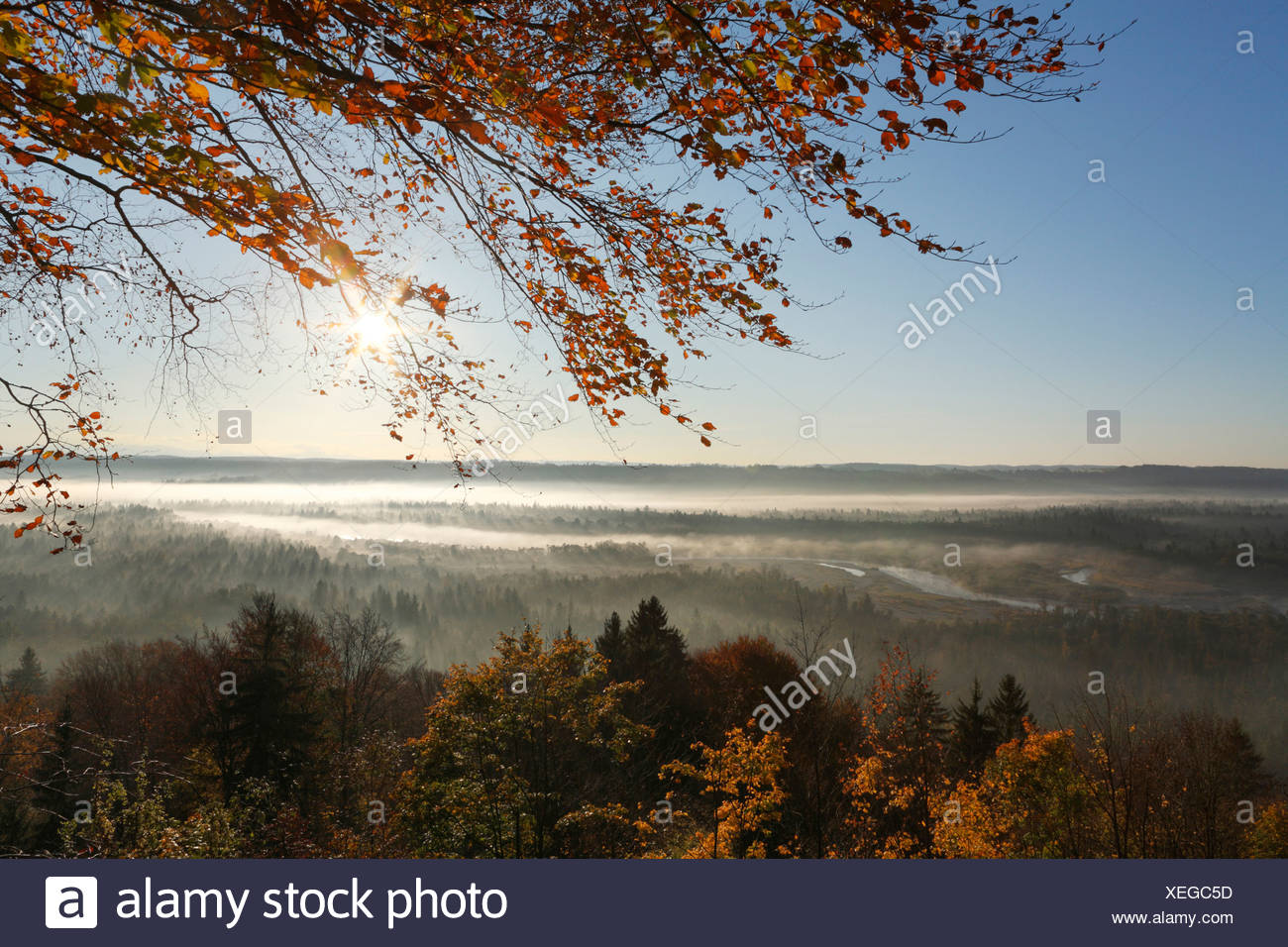 Morning mood in the Pupplinger riparian forest near Wolfratshausen, Isar wetlands, Upper Bavaria, Germany, Europe - Stock Image