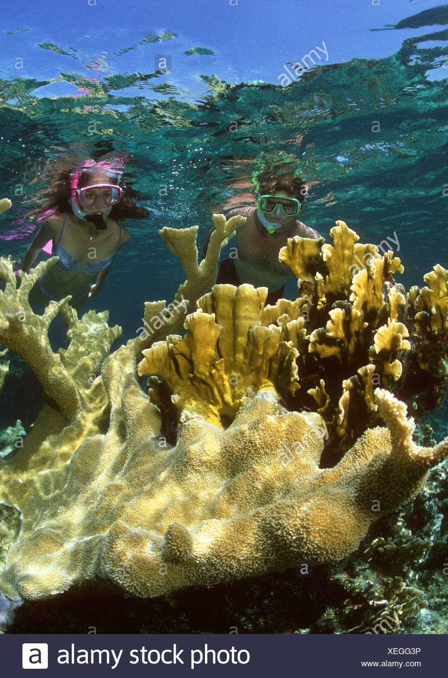 Male and female snorkeler above Elkhorn coral Acropora palmata New Providence Bahamas - Stock Image