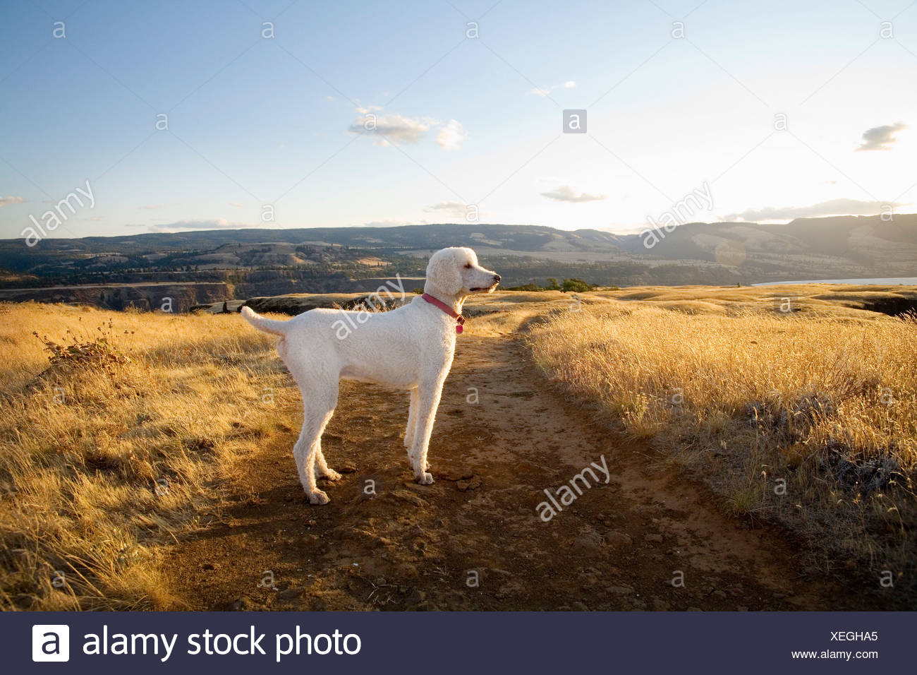 Dog standing alone on dirt path - Stock Image