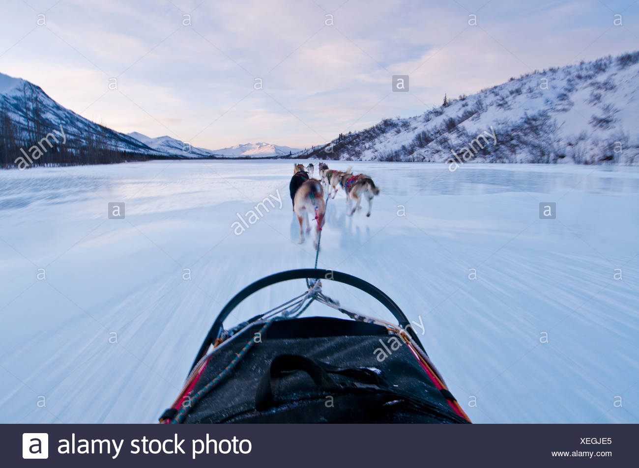 Musher's perspective while mushing down the North Fork of the Koyukuk River in Gates of the Arctic National Park , Alaska - Stock Image