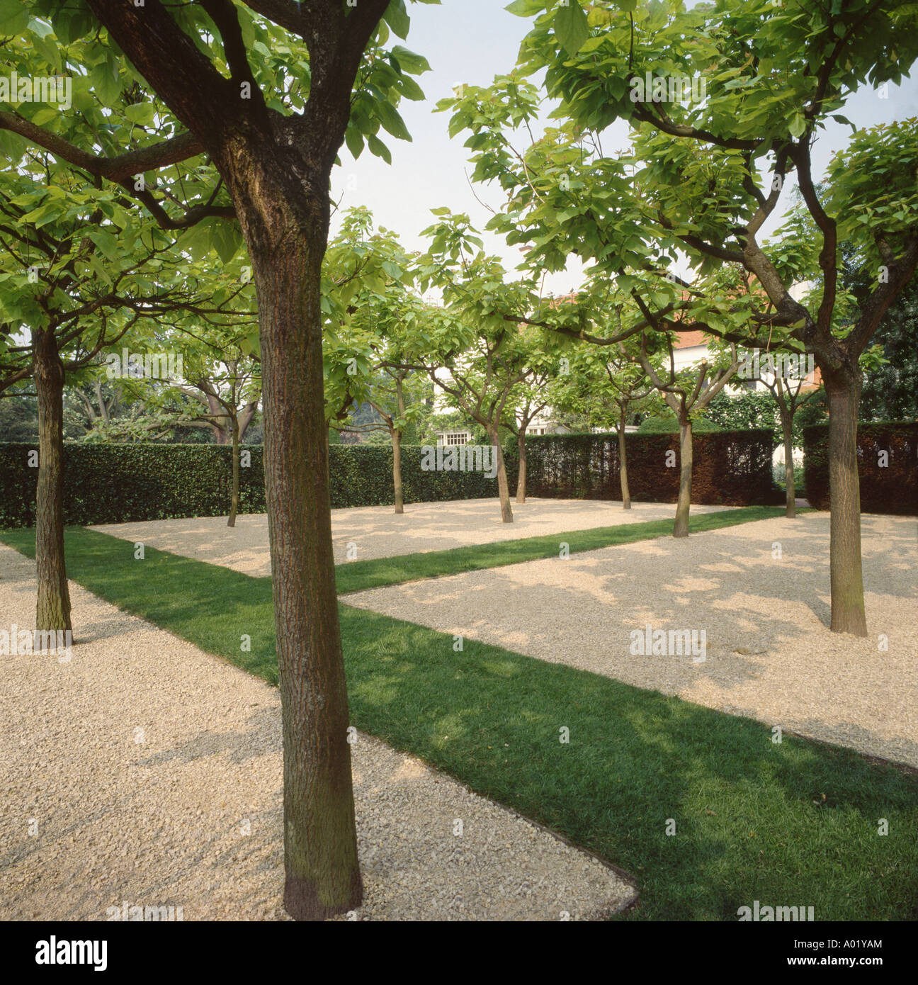Trees growing in large square gravel beds in well for Landscaping rocks under trees