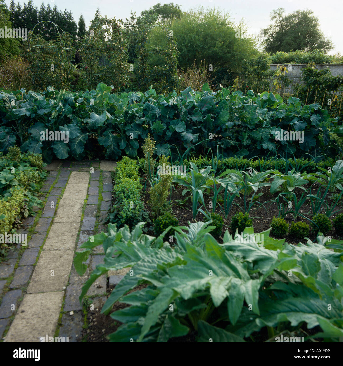 Path through large country vegetable garden stock photo for Large vegetable garden