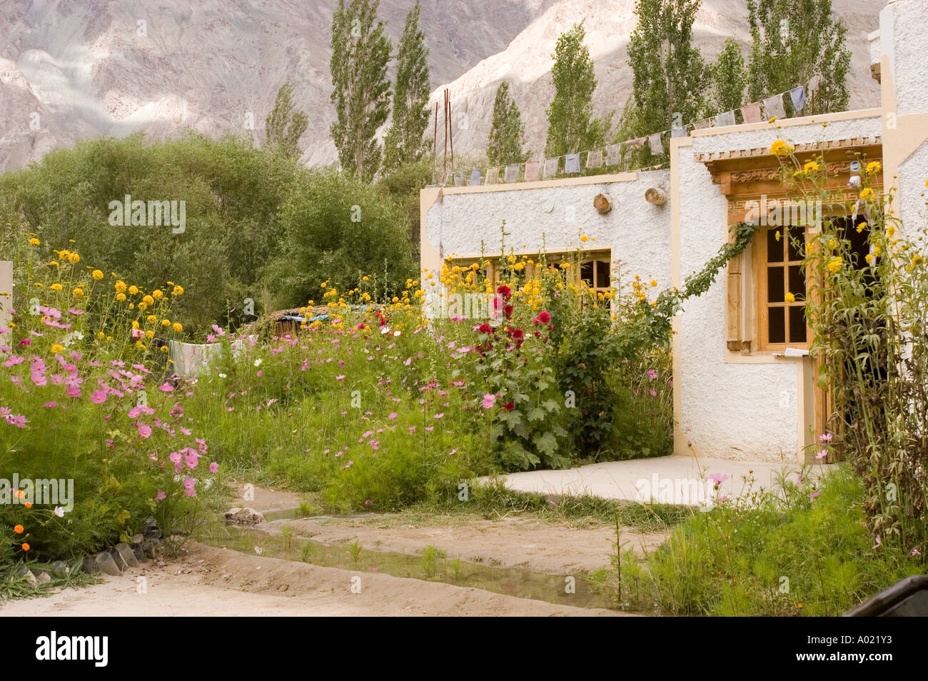 Guest house in palamik village with beautiful full bloom for Beauty full house