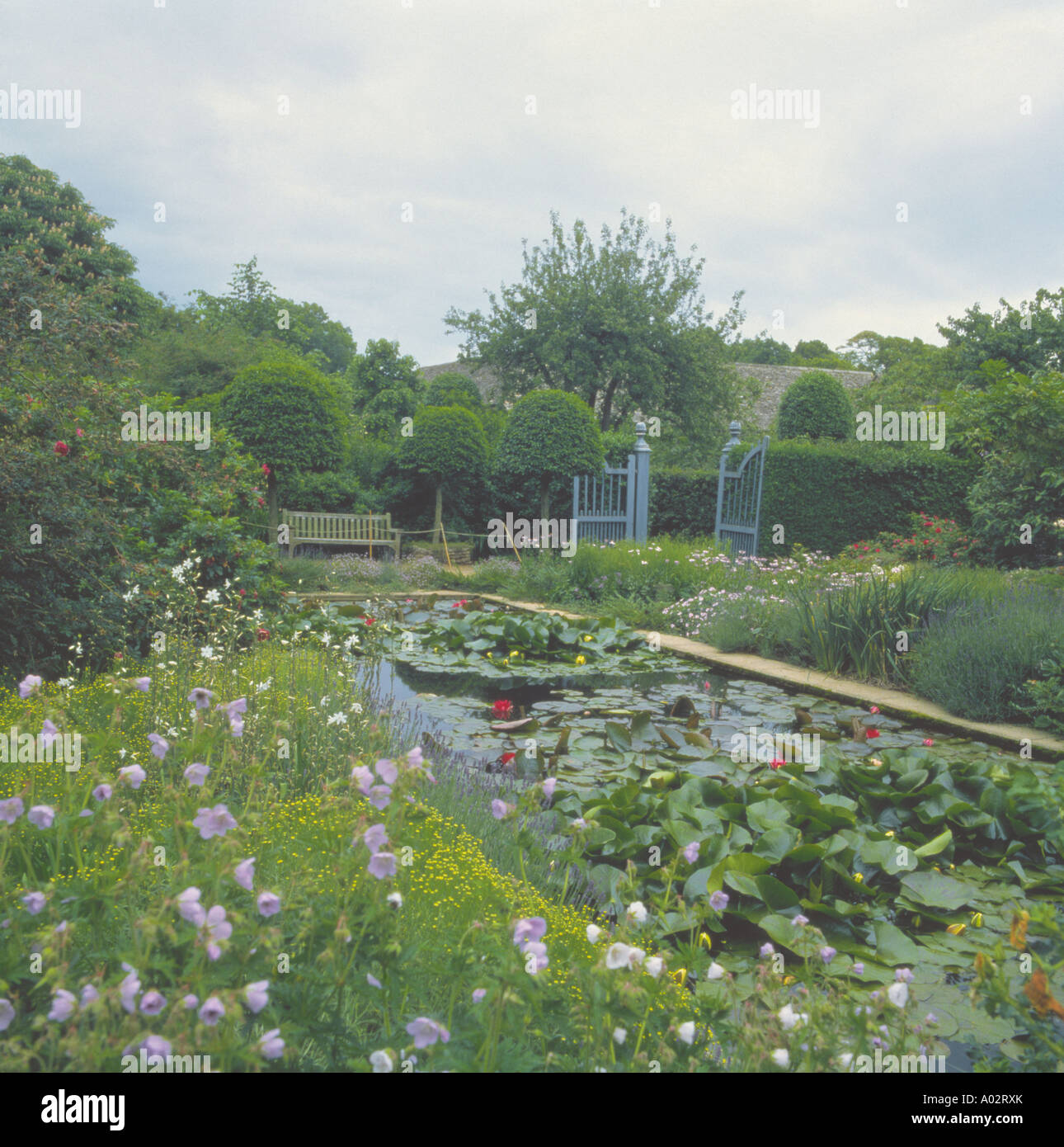 Large Rectangular Garden Pond With Waterlilies Beside Flowering Border With  Topiary