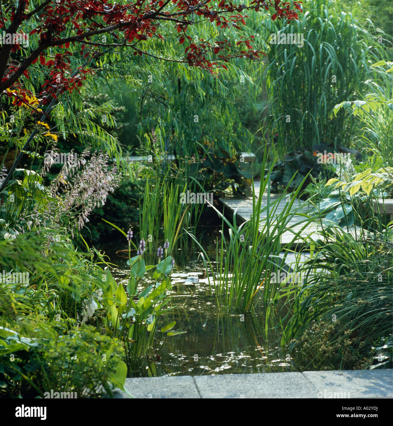 Lush planting around formal square garden pond stock photo for Square fish pond