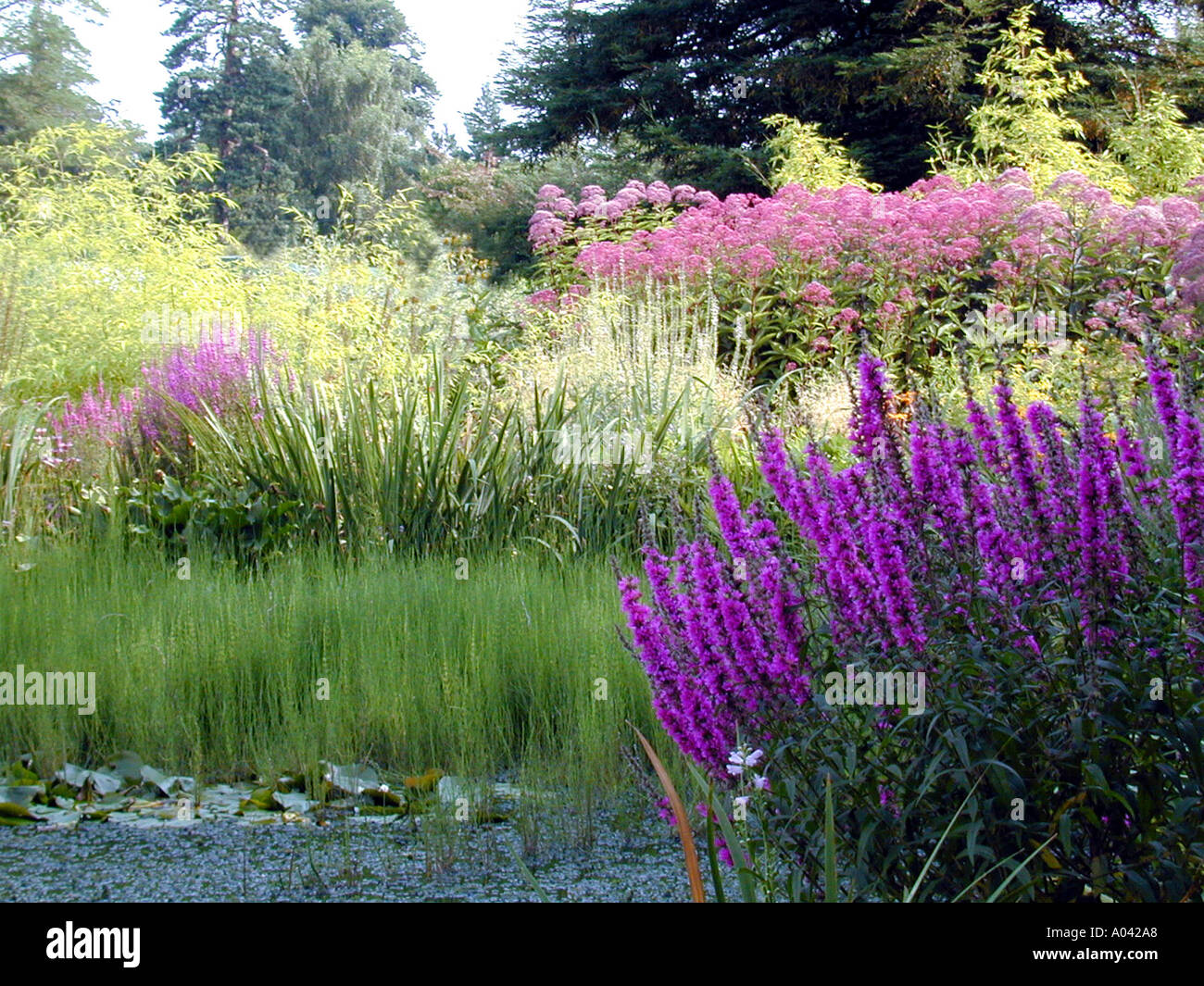 Exceptional Bog Water Garden At Broadview Gardens Kent