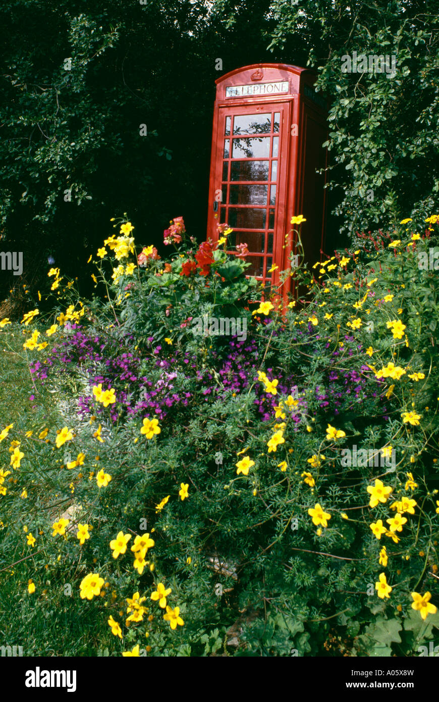 Stock Photo - Yellow bidens in flowerbed in front of red telephone box in garden & Yellow bidens in flowerbed in front of red telephone box in garden ... Aboutintivar.Com