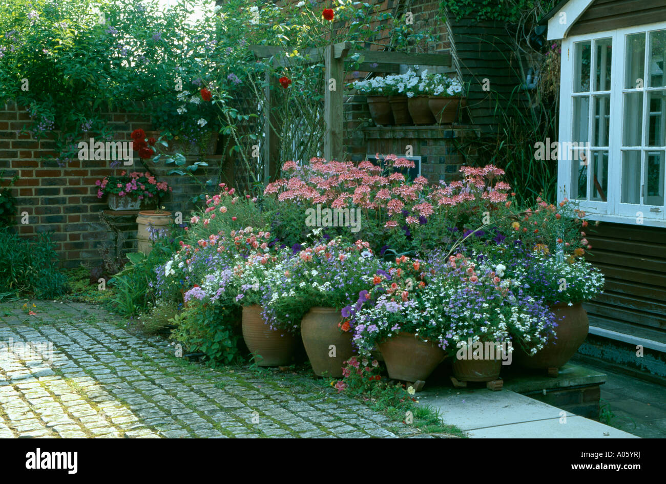Group Of Terracotta Pots Planted With Pink Geraniums On Patio Of Country  House