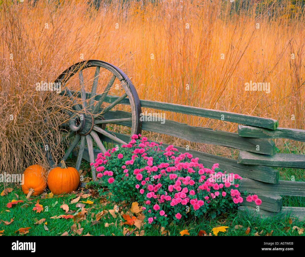 Illinois bureau county princeton - Bureau County Il Fall Scene Of Native Praire Grasses Pumpkins Chrysantheums With Weathered Fence Wagon Wheel