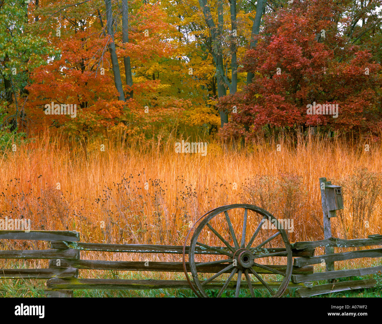 Illinois bureau county princeton - Bureau County Il Split Rail Fence And Tall Grass Praire At The Edge Of An Oak Maple Hardwood Forest In Fall Color